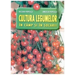 Cultura legumelor in camp si solarii