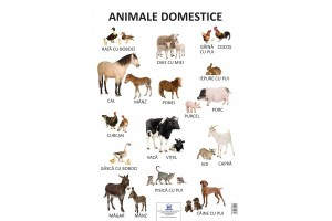 Plansa Animale domestice